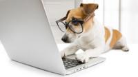 Imágenes profesionales para blogs