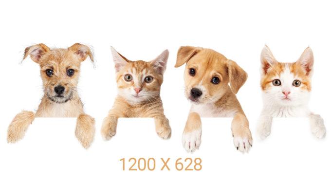 Si solo quiero hacer un tamaño de imagen para redes sociales ¿cuál uso? 1200×628